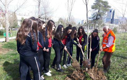 Nxënësit e klasave të 9-ta mbjellin pemë në Parkun e Madh të Liqenit Artificial